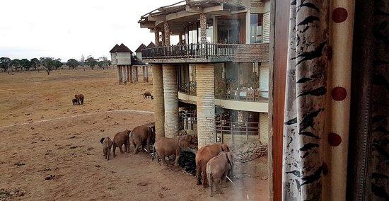 Tsavo, Kenya: Photo prise de mon lit!