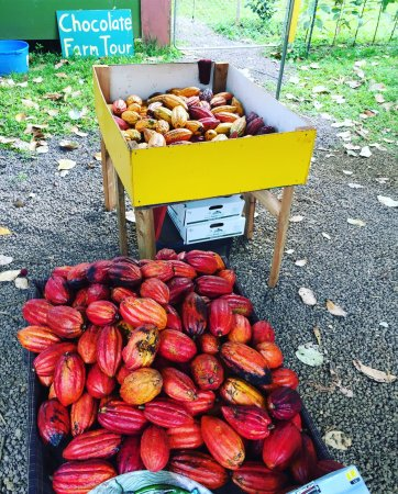Kilauea, HI: Photos from the amazing chocolate farm tour and tasting.
