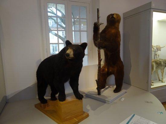 Musée Saint-Loup