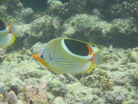 Poindimie, Nueva Caledonia: photo2.jpg