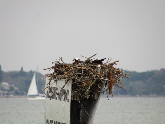 Quick Point Nature Reserve: Osprey nest in Sarasota Bay viewed from Quick Point overlook