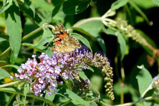 Meaux, Francia: Papillon