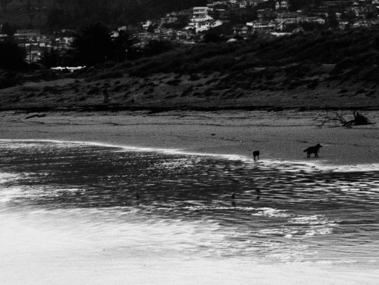 Morro Bay, Califórnia: Pooches love it here too.