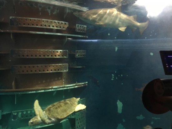 Grand Aquarium : photo0.jpg
