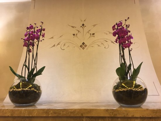Mamaison Hotel Le Regina Warsaw: Gorgeous Orchids in the lobby