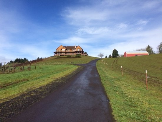Youngberg Hill Vineyards & Inn: Mile long driveway; wonderful for walking.