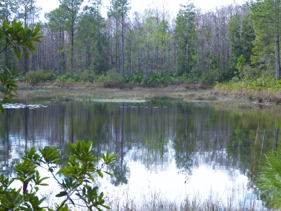 Geneva, FL: Flagler Trail pond