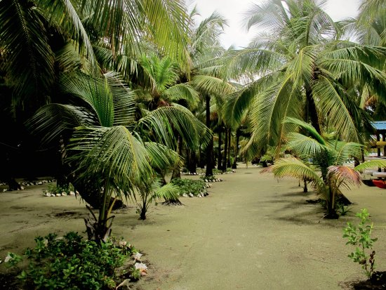 Glovers Reef Atoll, Belice: Morning walk to the kayack palapa.