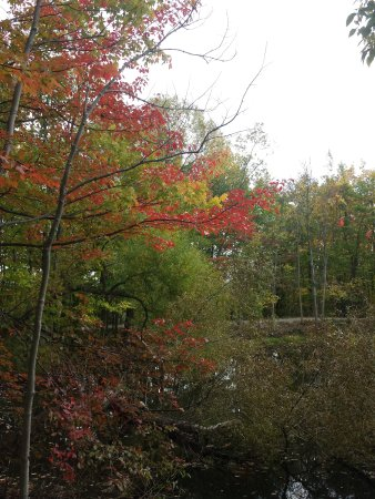 Concord, OH: Fall foliage