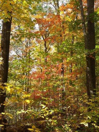 Concord, OH: Foliage