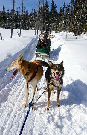 Sun Peaks, Canada: wonderful dogs