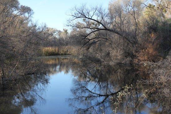 Wickenburg, AZ: Around the lake.