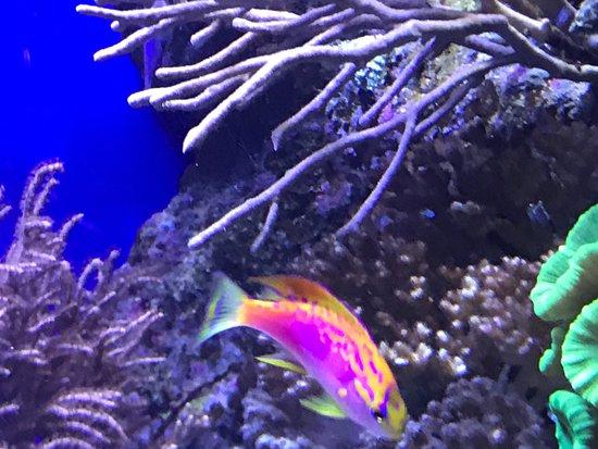 Aquarium des Lagons Nouvelle Caledonie: photo5.jpg
