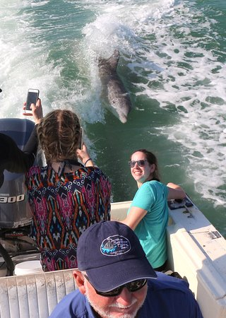 Santiva Saltwater Fishing: Dolphins in the wake