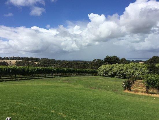 Red Hill, Australia: photo1.jpg