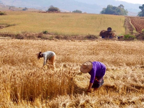 'It's Not Shameful to Work in the Fields. But It's Hard.'