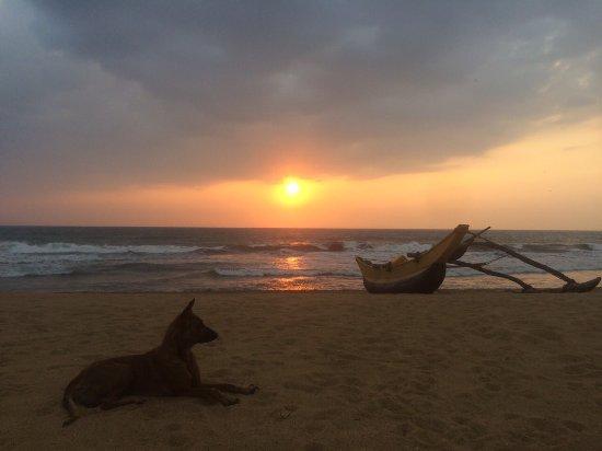 Kalutara, Sri Lanka: image-0-02-06-7a7292f4534bbd7662684794a9aa55402adcd2df172a78869813c453add0a1f2-V_large.jpg