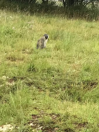 Graskop, Sudáfrica: photo4.jpg