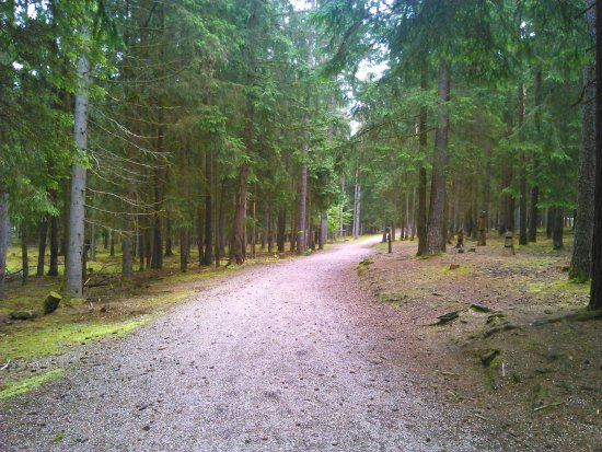 Pegnitz, Almanya: inside of the woods