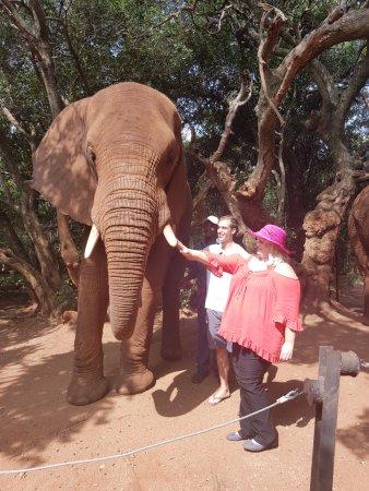 Hartbeespoort, Güney Afrika: Meeting the elephants