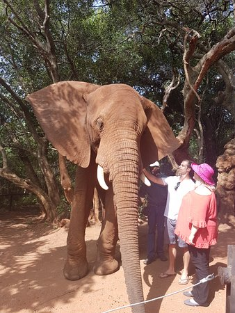 Hartbeespoort, Zuid-Afrika: Meeting the elephants