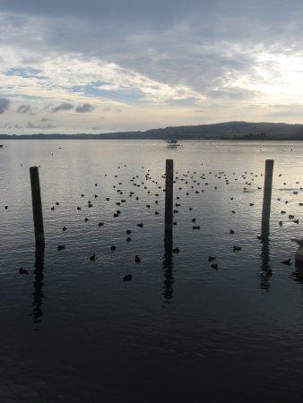 Lake Rotorua, early morning