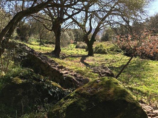 Thiesi, Italia: Paesaggio Mandra Antine