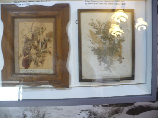 Cradock, Sør-Afrika: Lovely dried flowers Olive collected pressed and framed