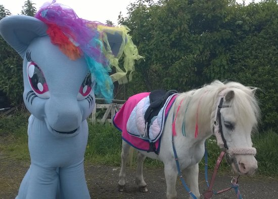 Meols, UK: my little pony ! Dash