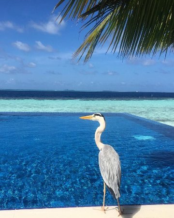 Vilamendhoo Island Resort & Spa: photo0.jpg