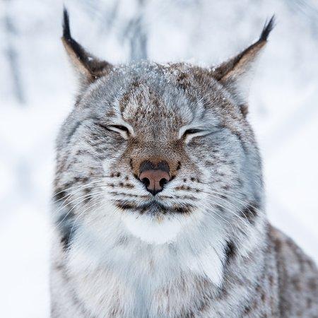 Lynx GebГјhren