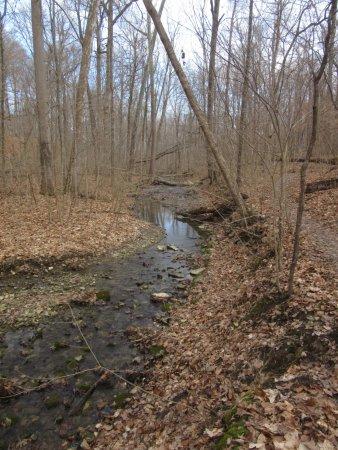 Oxford, OH : Hueston Woods State Park-Big Woods Trail Creek
