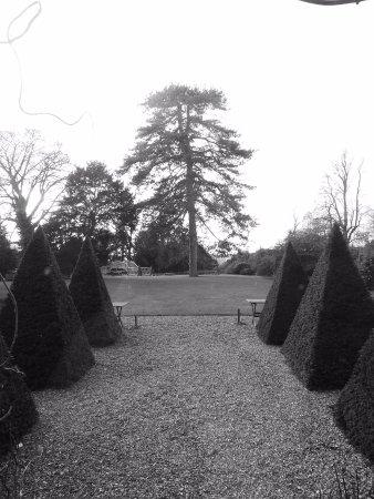 Godmanchester, UK: garden