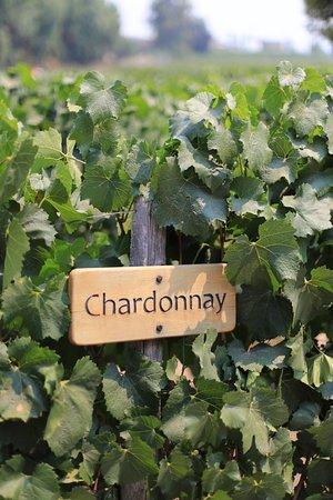 Pirque, Chile: Concha y toro Winery