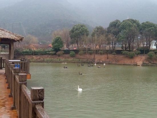 Wuxi Zoo: Waterfowl area