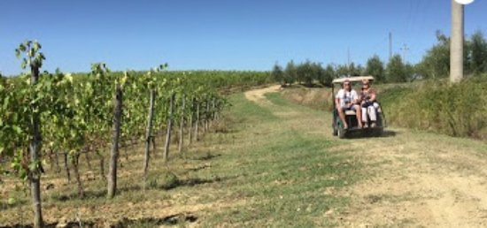 San Gimignano, Italy: Tour through the rows of vines with eletric car
