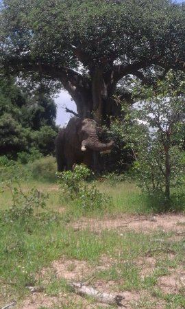 Limpopo Province, South Africa: Elephant!
