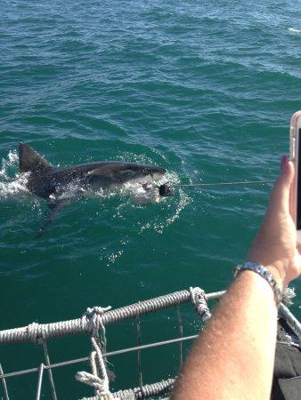 มอสเซลเบย์, แอฟริกาใต้: He's got the bait!