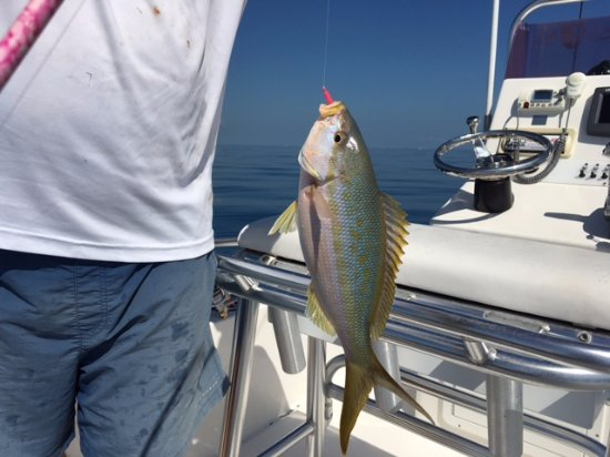 Ramrod Key, Flórida: The Yellowtail Snapper fishing is no doubt the best in the Keys!