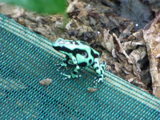 Mawamba Lodge: Frog in sanctuary on grounds.