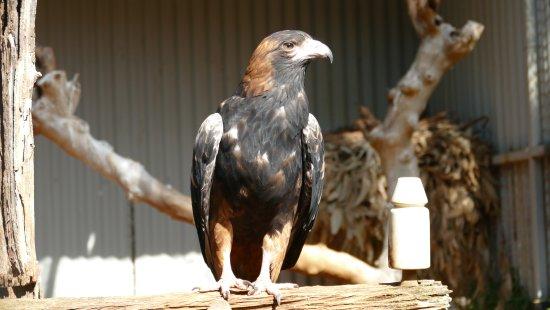 Blacktown, Australia: Featherdale Wildlife Park