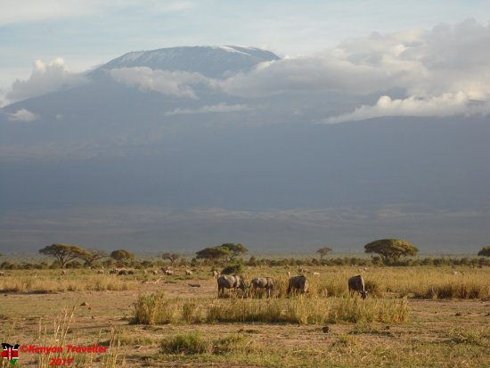 Amboseli National Park, Kenya: Wildebeasts in the shadows of Kilimanjaro