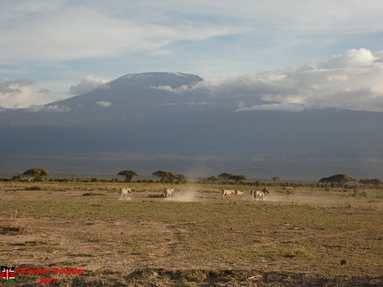 Amboseli National Park, Kenya: Zebra with Kilimanjaro