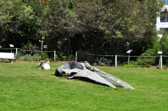 Mossel Bay, Sudafrica: A whale skeleton in the garden of the museum
