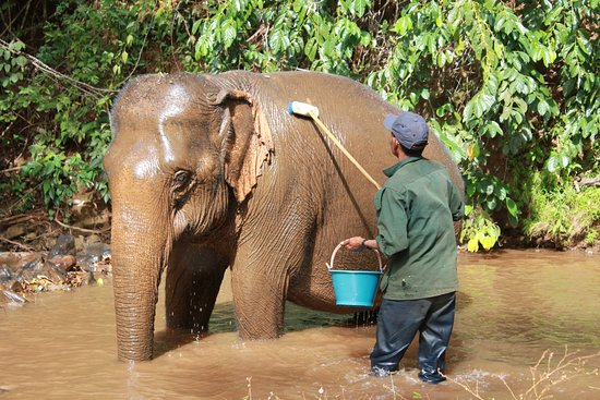 Sen Monorom, Cambodge : Each elephant has it's own Mahout or caretaker. Some elephants need a helping hand when bathing
