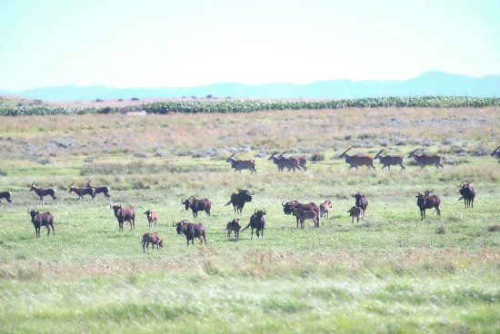 Harrismith, แอฟริกาใต้: Some of the different game on his land