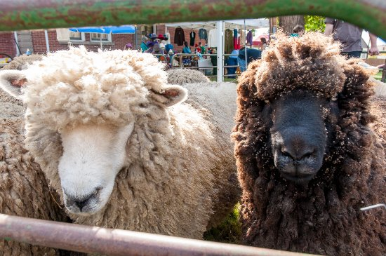 Walla Walla, WA: Come see us at Sheep to Shawl in the fall.