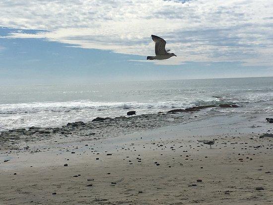 Swami's Beach: photo2.jpg