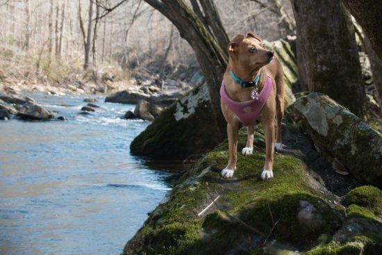 Grove Hill, AL: Deli the rescue dog.
