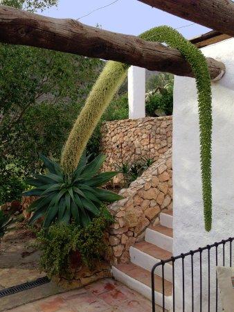 Nijar, Spain: l'énorme fleur sur la terrasse